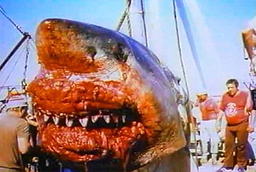 巨大 サメ