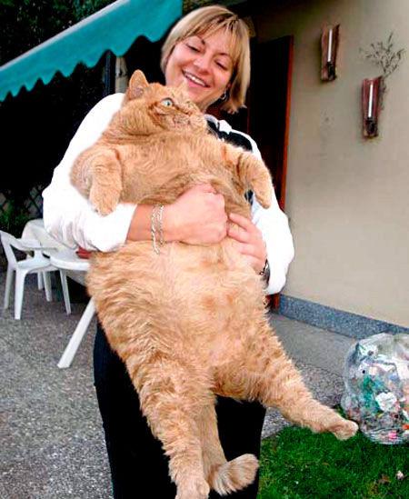 巨大なネコ