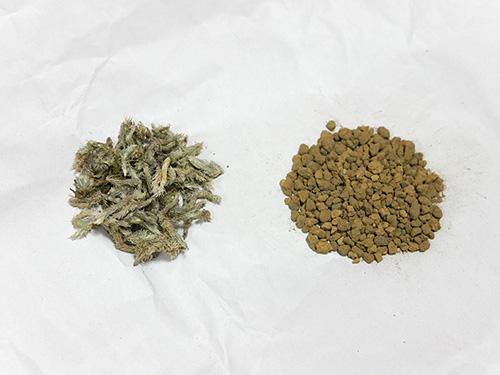 苔テラリウム